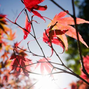 avalan-utopia-walled-garden-leaves