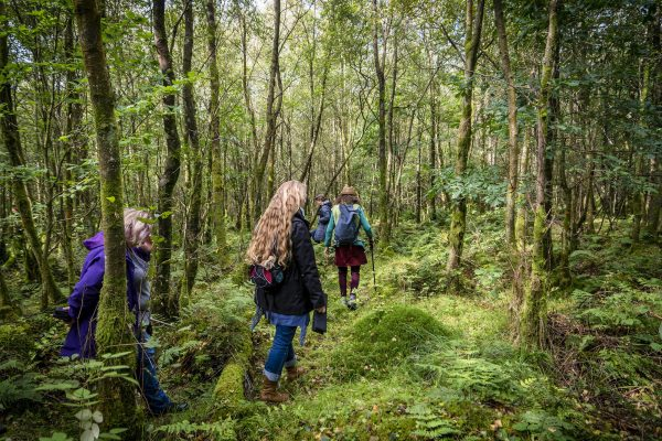 Avalon Sanctuary Liz Dawes Guided Forest Walk